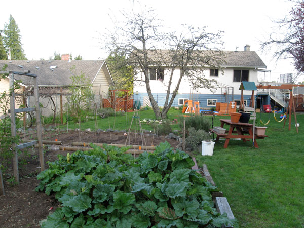 View of our vegetable/fruit garden