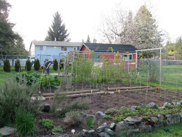 View of our produce garden, looking up towards the raspberries