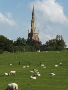 Sheep in field, church in background
